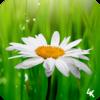 Приложение -  Flower Wallpaper (4k)