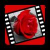 Игра -  Love videos