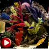 Приложение -  Аквариум Видео Живые Обои