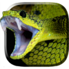 Змея Живые Обои 5.0